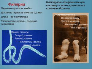 Филярии Паразитируют на людях Диаметр червя не больше 0,3 мм Длина- до полум