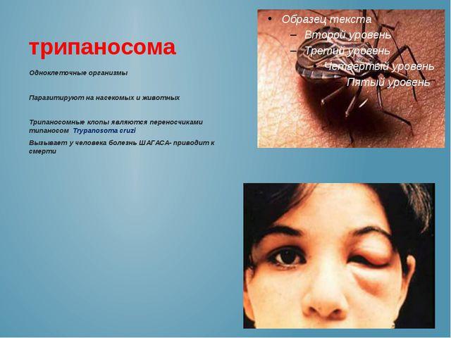 трипаносома Одноклеточные организмы Паразитируют на насекомых и животных Трип...