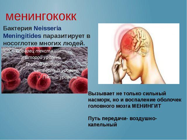 менингококк Бактерия Neisseria Meningitides паразитирует в носоглотке многих...