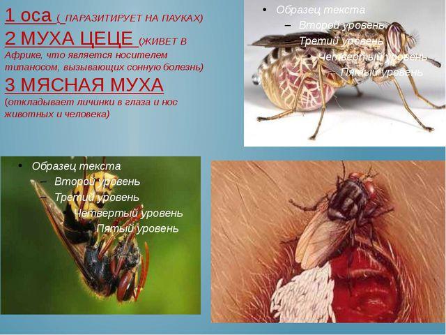 1 оса ( ПАРАЗИТИРУЕТ НА ПАУКАХ) 2 МУХА ЦЕЦЕ (ЖИВЕТ В Африке, что является нос...