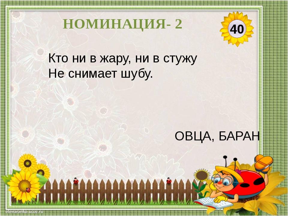 50 НОМИНАЦИЯ- 2 Гладишь-ласкается, Дразнишь-кусается. СОБАКА