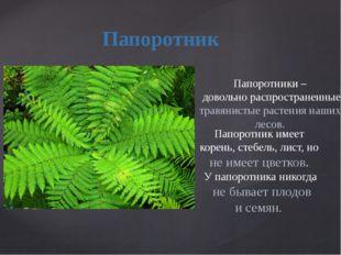 . Папоротник Папоротник имеет корень, стебель, лист, но не имеет цветков. У п
