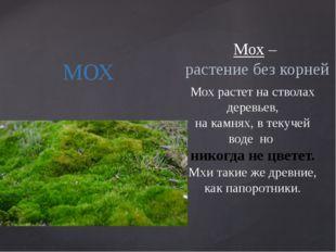 МОХ Мох – растение без корней Мох растет на стволах деревьев, на камнях, в те