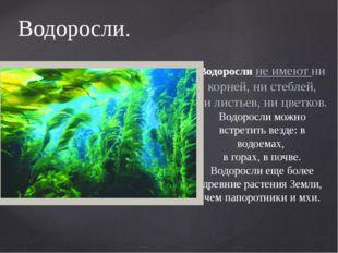 Водоросли. Водоросли не имеют ни корней, ни стеблей, ни листьев, ни цветков.