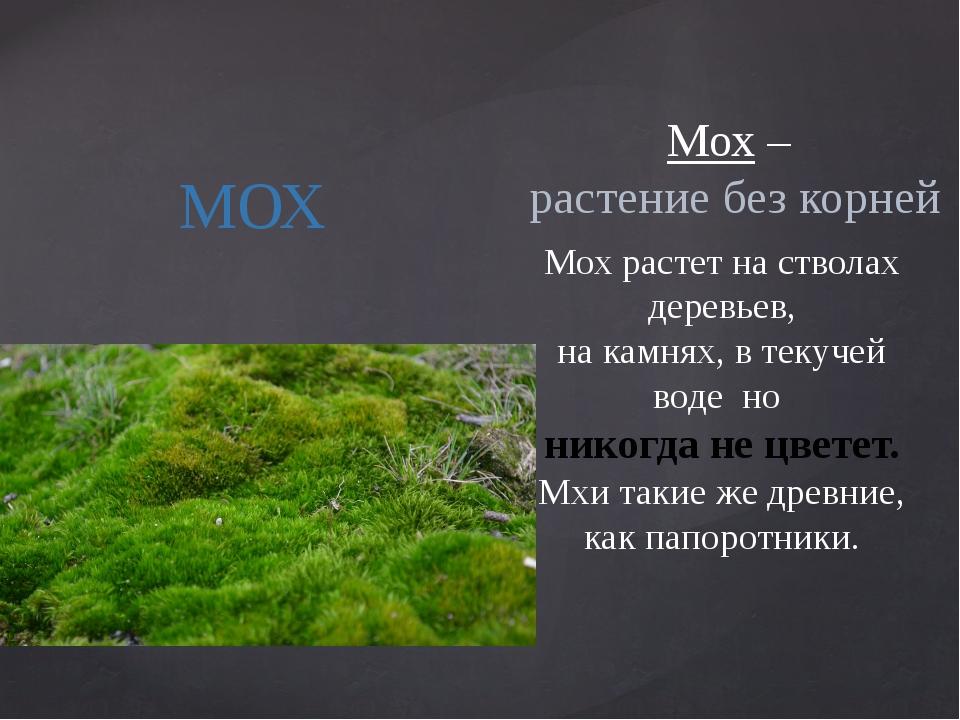 МОХ Мох – растение без корней Мох растет на стволах деревьев, на камнях, в те...