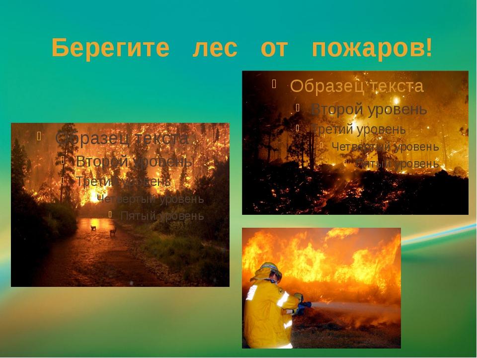 Берегите лес от пожаров!