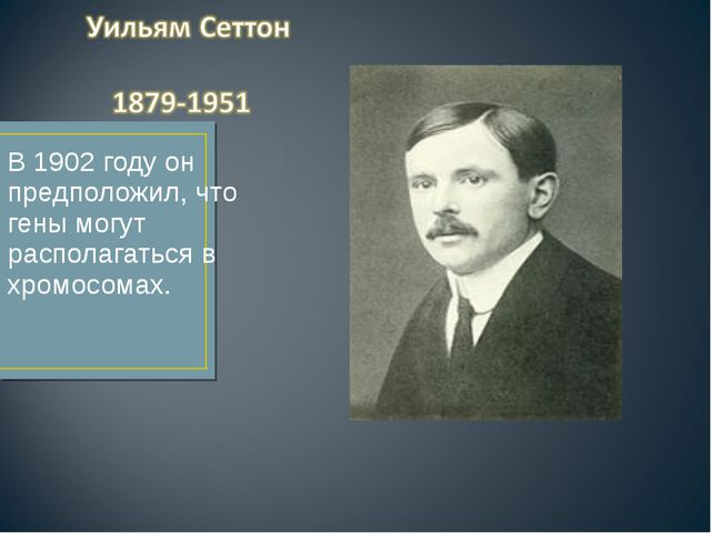 В 1902 году он предположил, что гены могут располагаться в хромосомах.