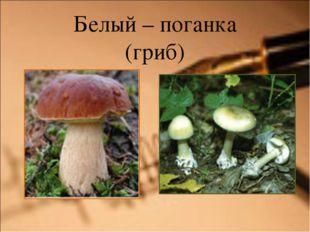 Белый – поганка (гриб)