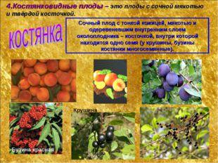 4.Костянковидные плоды – это плоды с сочной мякотью и твёрдой косточкой. Сочн