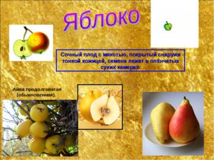 Сочный плод с мякотью, покрытый снаружи тонкой кожицей, семена лежат в плёнча