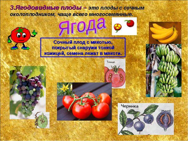 3.Ягодовидные плоды – это плоды с сочным околоплодником, чаще всего многосемя...