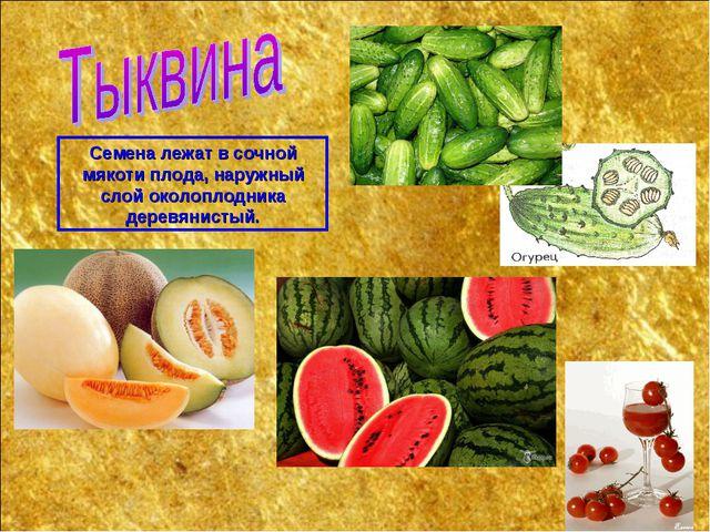 Семена лежат в сочной мякоти плода, наружный слой околоплодника деревянистый.