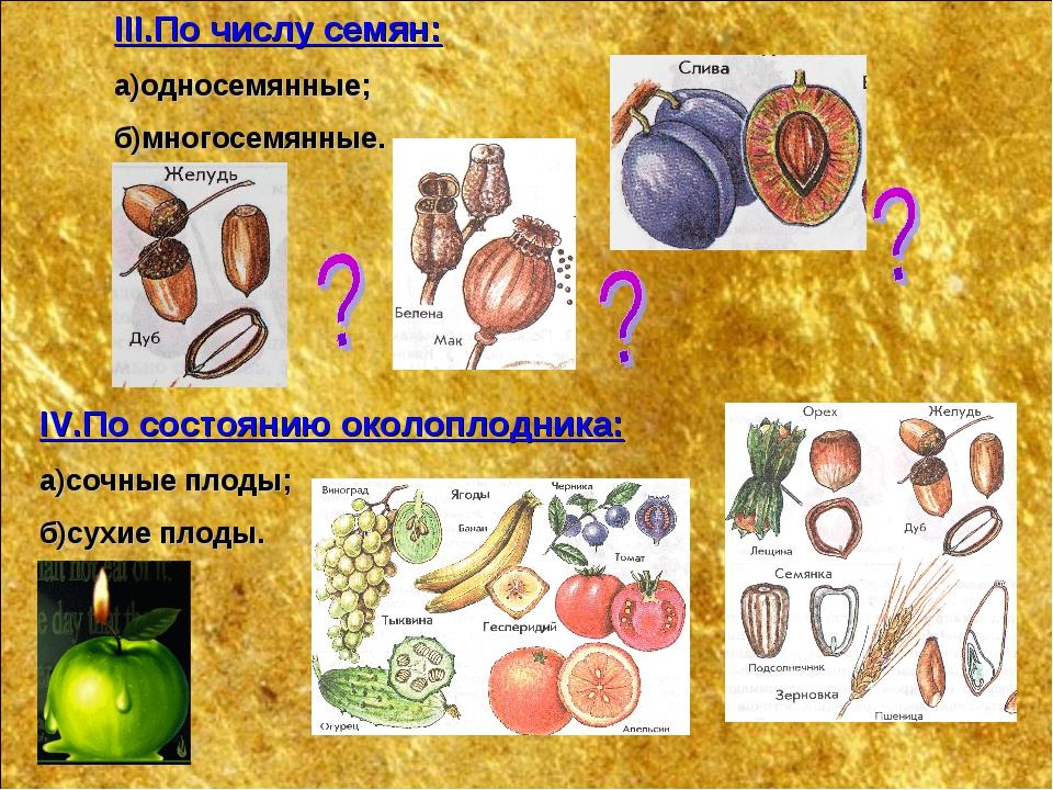 IV.По состоянию околоплодника: а)сочные плоды; б)сухие плоды. III.По числу се...