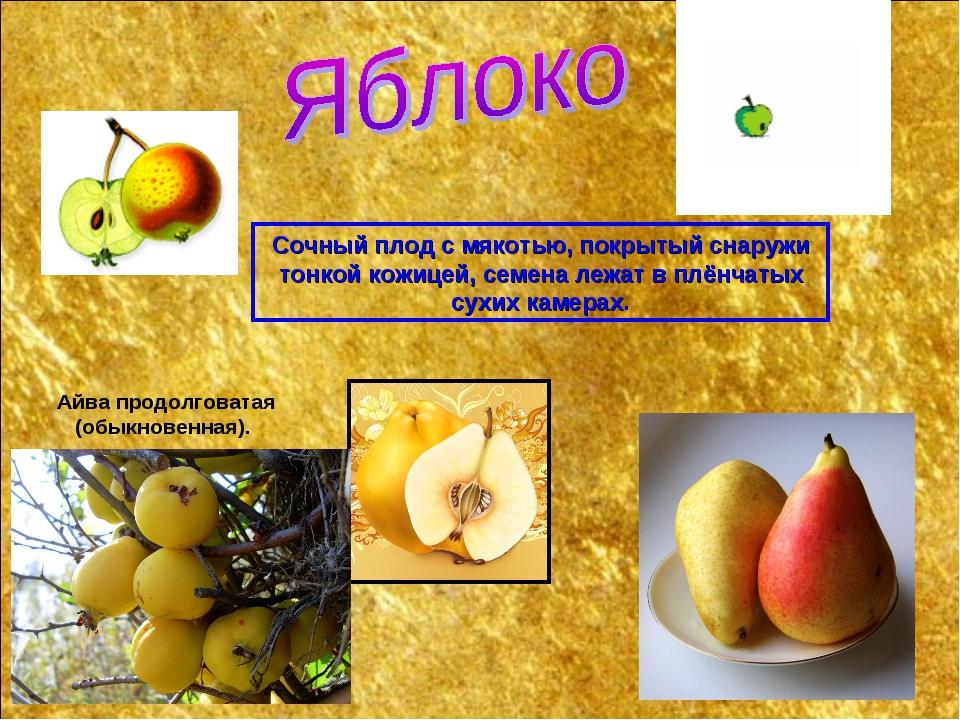 Сочный плод с мякотью, покрытый снаружи тонкой кожицей, семена лежат в плёнча...