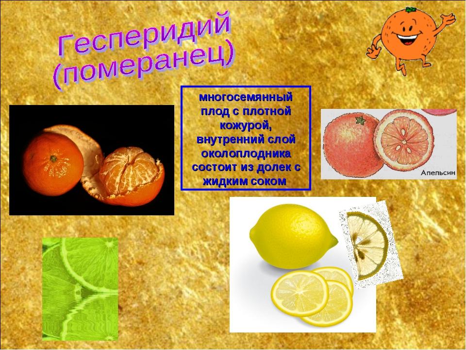 многосемянный плод с плотной кожурой, внутренний слой околоплодника состоит и...