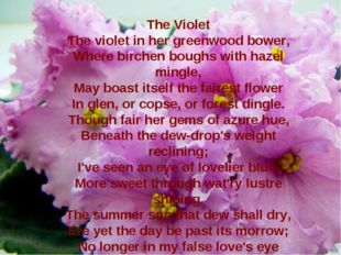 The Violet The violet in her greenwood bower, Where birchen boughs with hazel
