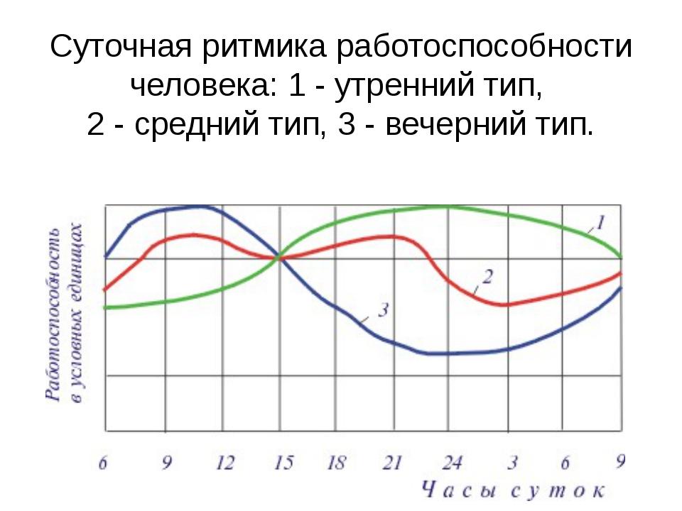 Суточная ритмика работоспособности человека: 1 - утренний тип, 2 - средний ти...
