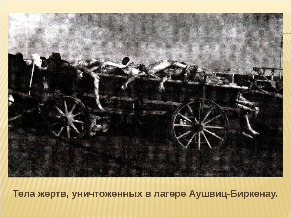 Тела жертв, уничтоженных в лагере Аушвиц-Биркенау.