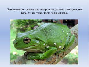 Земноводные – животные, которые могут жить и на суше, и в воде. У них голая,