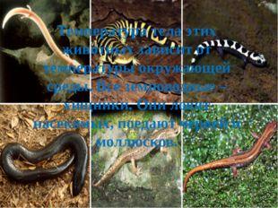 Температура тела этих животных зависит от температуры окружающей среды. Все з