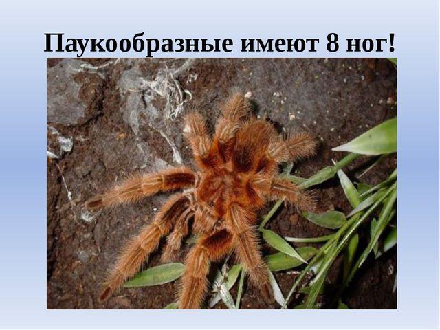 Паукообразные имеют 8 ног!