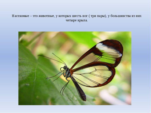 Насекомые – это животные, у которых шесть ног ( три пары), у большинства из н...