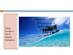 Кипр назван в честь дерева кипариса.