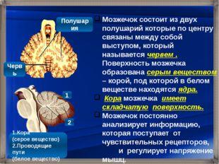 Мозжечок состоит из двух полушарий которые по центру связаны между собой выс