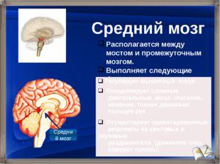 Располагается между мостом и промежуточным мозгом. Выполняет следующие функци