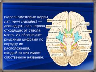 Черепны́е не́рвы (черепномозговые нервы, лат.nervi craniales)— двенадцать п