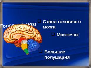 Ствол головного мозга Мозжечок Большие полушария Головной мозг