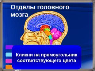 Кора больших полушарий Продолговатый мозг Средний мозг Промежуточный мозг Мо