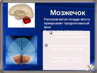 Располагается позади моста прикрывает продолговатый мозг Выполняют следующие