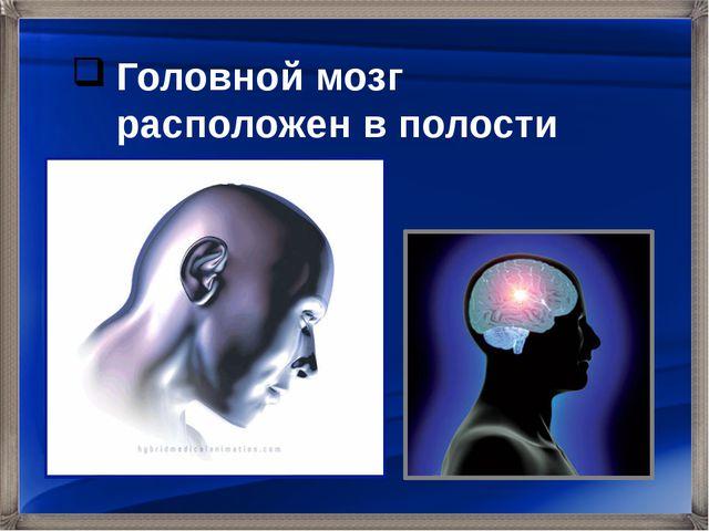 Головной мозг расположен в полости черепа.