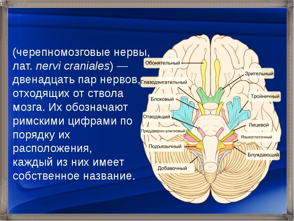 Черепны́е не́рвы (черепномозговые нервы, лат.nervi craniales)— двенадцать п...