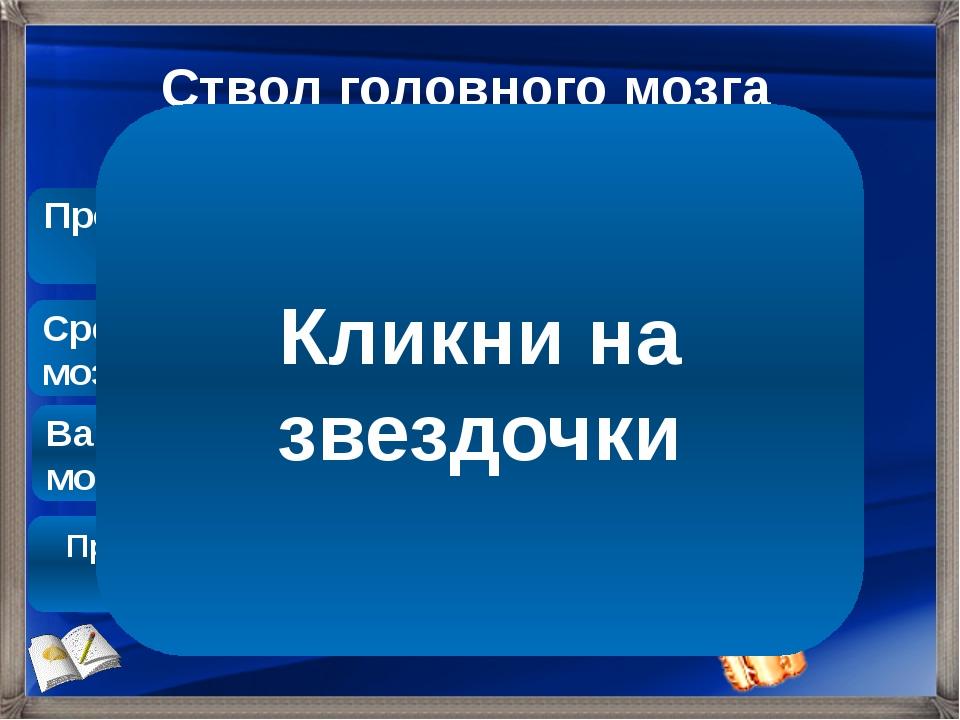 Ствол головного мозга Продолговатый мозг Варолиев мост Средний мозг Промежуто...