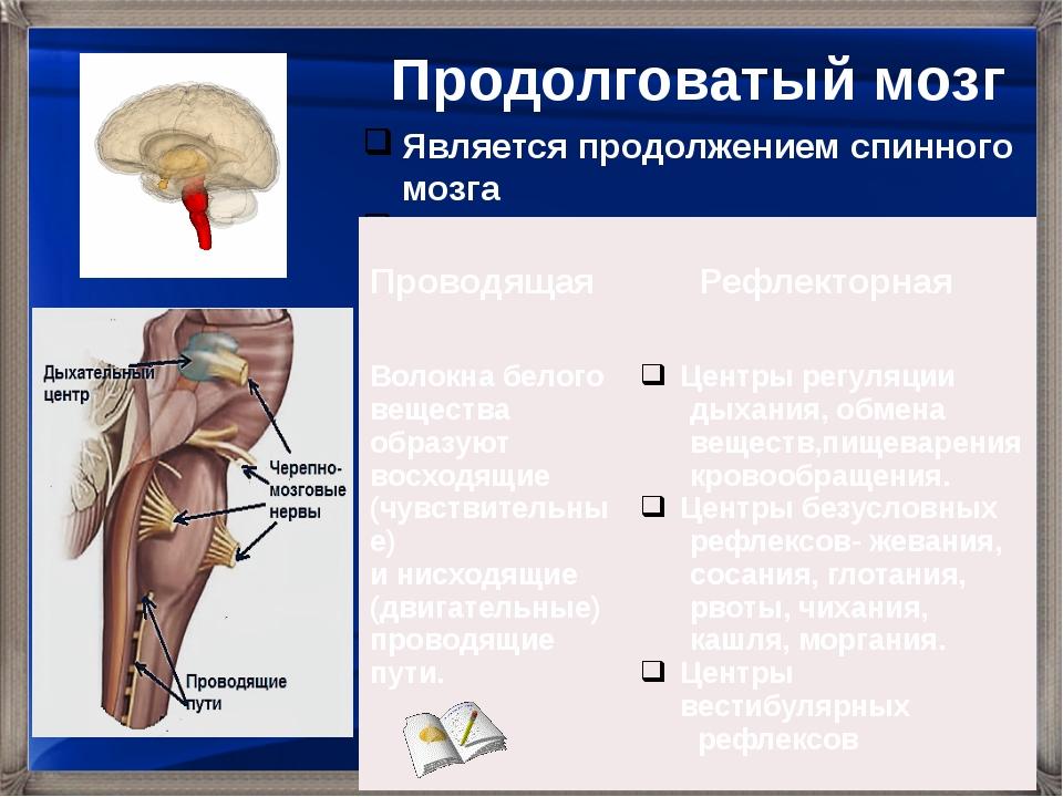 Является продолжением спинного мозга Выполняет следующие функции: Продолговат...