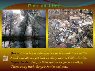 Fact: Litter is not only ugly, it can be harmful to wildlife. Small animals c