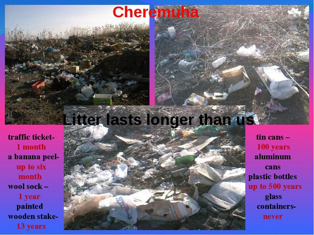Cheremuha Litter lasts longer than us traffic ticket- 1 month a banana peel-...