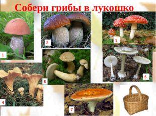 Собери грибы в лукошко 1 2 3 4 5 7 6