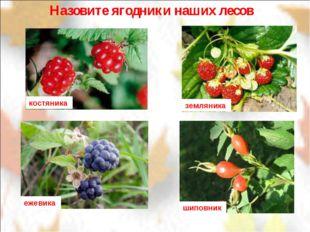 Назовите ягодники наших лесов костяника земляника шиповник ежевика