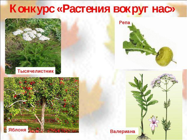 Конкурс «Растения вокруг нас» Тысячелистник Репа Яблоня Валериана