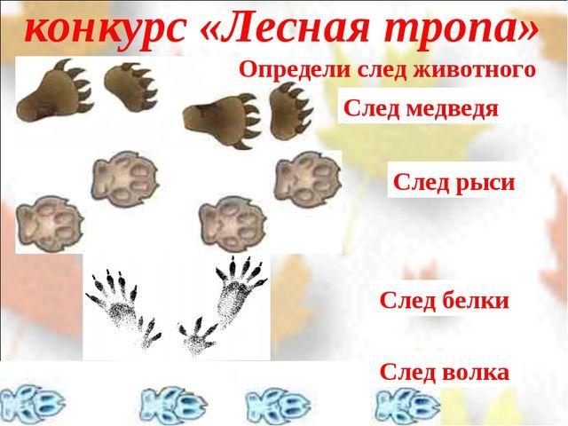 конкурс «Лесная тропа» След белки След медведя След рыси След волка Определи...