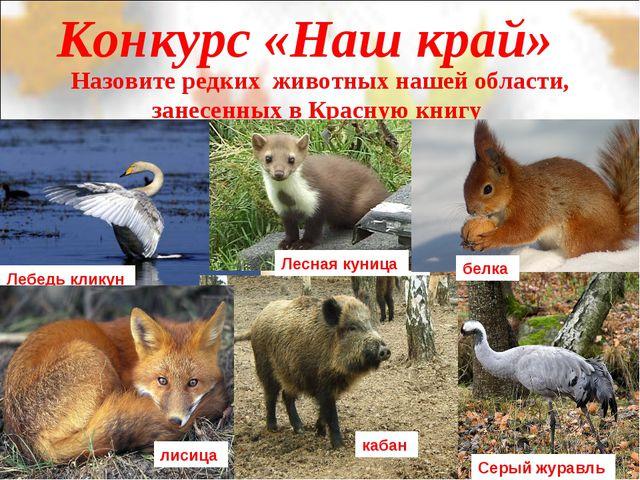 Конкурс «Наш край» Назовите редких животных нашей области, занесенных в Крас...