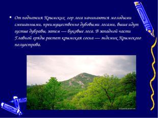 От подножия Крымских гор леса начинаются молодыми смешанными, преимущественно