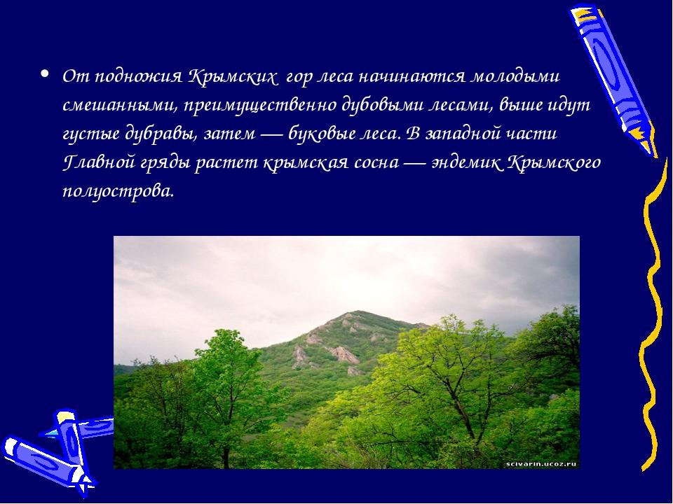 От подножия Крымских гор леса начинаются молодыми смешанными, преимущественно...