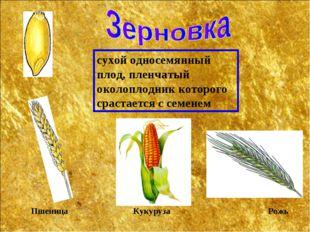 сухой односемянный плод, пленчатый околоплодник которого срастается с семенем