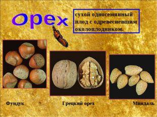 сухой односемянный плод с одревесневшим околоплодником. Фундук Грецкий орех М