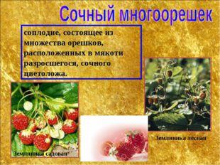 соплодие, состоящее из множества орешков, расположенных в мякоти разросшегося