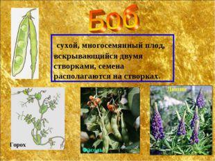сухой, многосемянный плод, вскрывающийся двумя створками, семена располагают